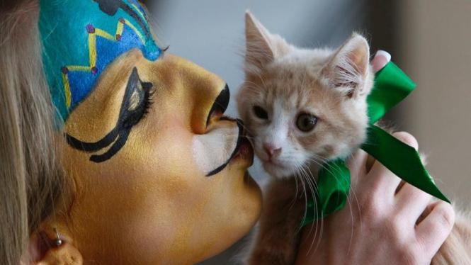 Kontes Kucing di New York