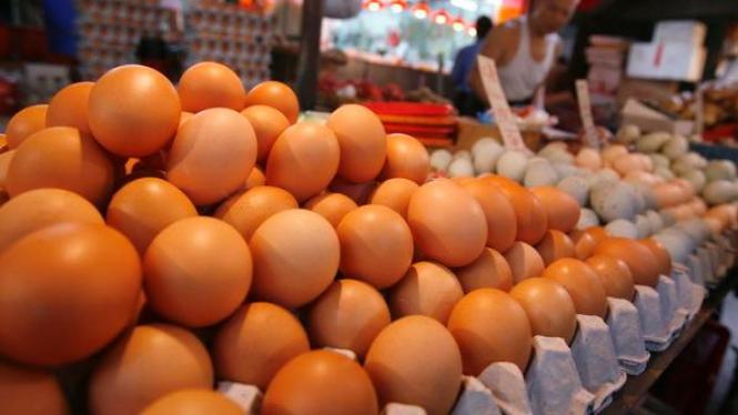 Pedagang Telur