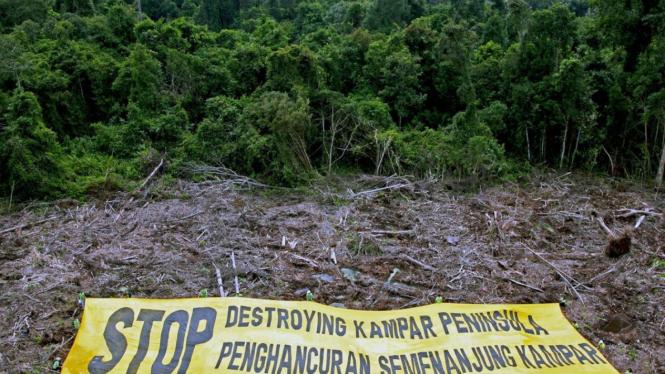 Greenpeace desak lestarikan hutan gambut di Kampar, Riau