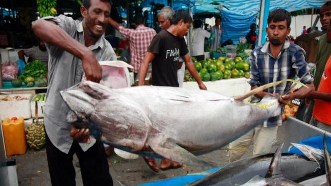 Pedagang pasar di Maladewa sibuk memindahkan ikan tuna