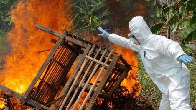 Membakar kandang unggas, memusnahkan flu burung