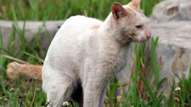 Kucing, salah satu hewan peliharaan