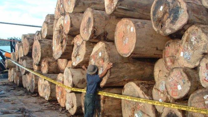 kayu illegal
