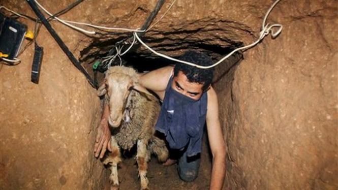 Mengirim kambing dari Mesir ke Gaza di terowongan bawah tanah