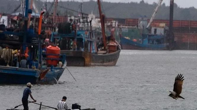 Elang Laut di Pelabuhan Kampung Bugis, Tanjung Pinang
