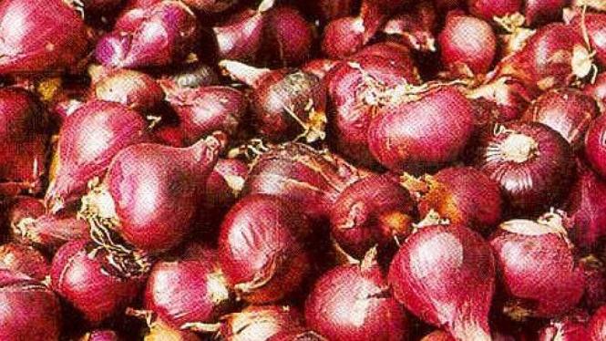 bawang merah