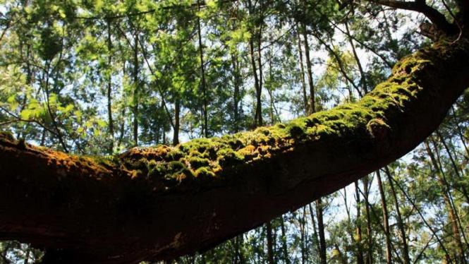 Pohon Tumbang di Telaga Warna Dieng Wonosobo Jawa Tengah