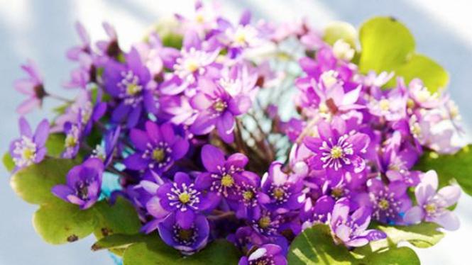 Bunga segar