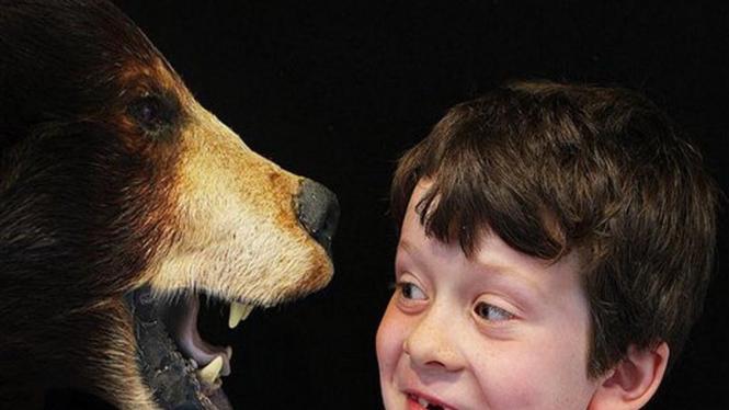 Seorang anak kecil menatap sebuah replika kepala beruang