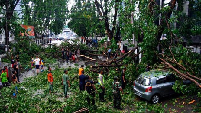 Pohon Tumbang di Agus Salim