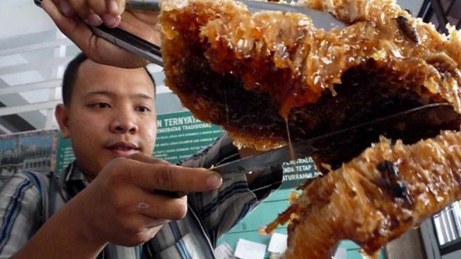 Sarang lebah madu di Medan