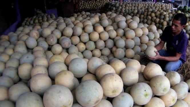Pembeli buah sedang meneliti melon di pasar Induk Gedebage, Bandung