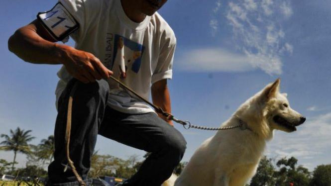 Anjing jenis Kintamani bersama pemiliknya