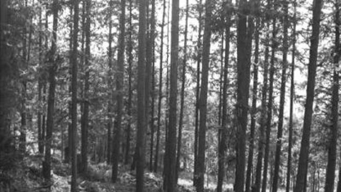 Hutan kayu putih