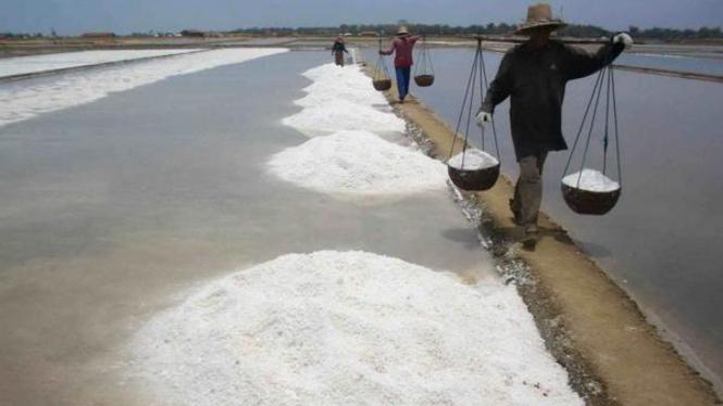 Petani garam sedang memanen hasilnya di Rembang, beberapa waktu lalu.