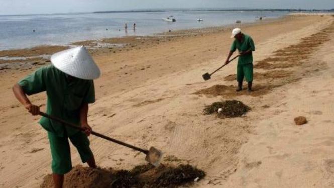 Sampah di Pantai Sanur, Bali, ditimbun ke dalam lubang