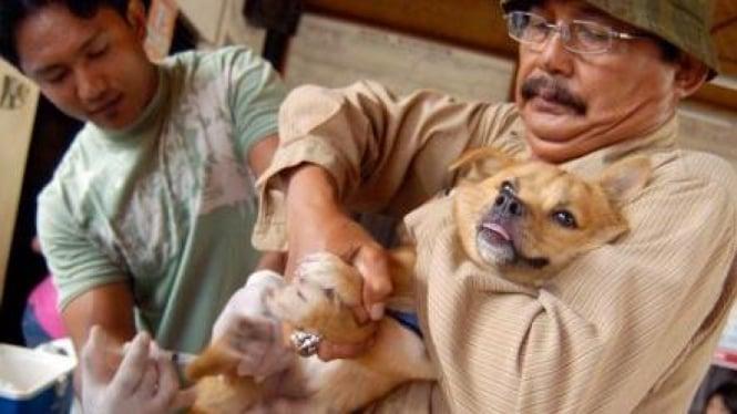 Seekor anjing menerima vaksinasi rabies