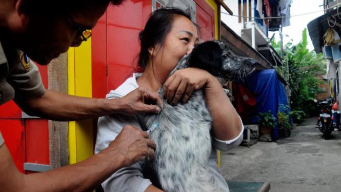 Vaksinasi Anjing Cegah Rabies
