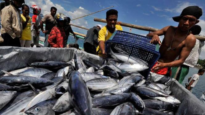 Ikan Hasil Tangkapan Nelayan. (Foto ilustrasi).