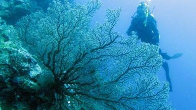 Terumbu karang perairan Pulau Hoga, Wakatobi, Sulawesi