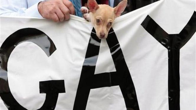 Seekor anjing ikut dalam demonstrasi kaum homoseksual di Roma, Italia