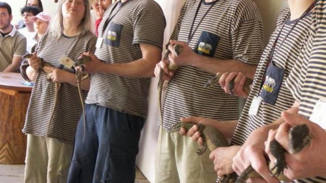 Sejumlah anak komodo diperlihatkan di Kebun Binatang Praha, Ceko
