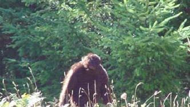 Makhluk diduga Bigfoot di Amerika Serikat
