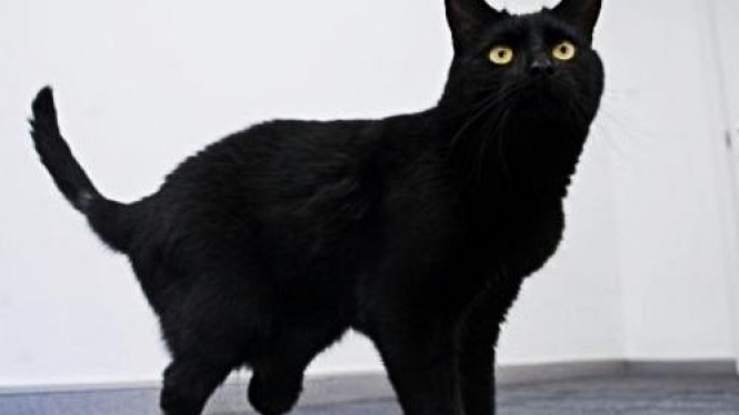Oscar, kucing bionik pertama