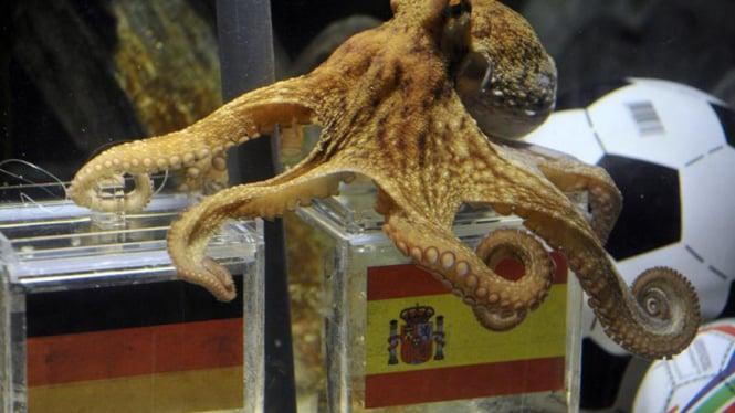 Paul si gurita menjagokan Spanyol ungguli Jerman