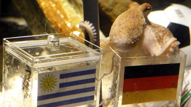 Paul si gurita memilih Jerman mengalahkan Uruguay