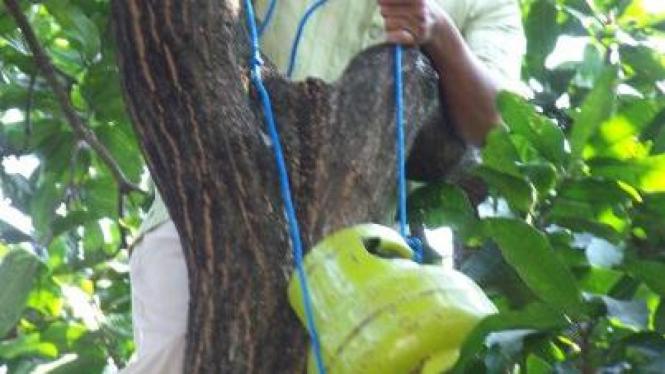 Tabung gas bocor digantung pemiliknya di pohon