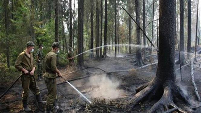 Kebakaran di Hutan Noginsk, 70 km sebelah timur Moskow, Rusia