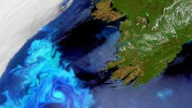 Plankton terlihat dari angkasa