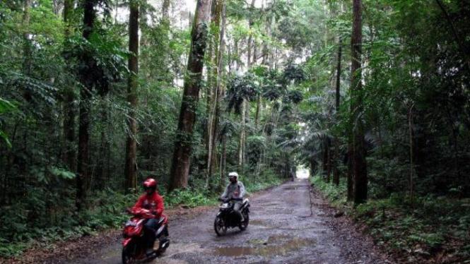 Hutan Pusat Riset Kehutanan Internasional (Cifor) di Sindang Barang, Bogor