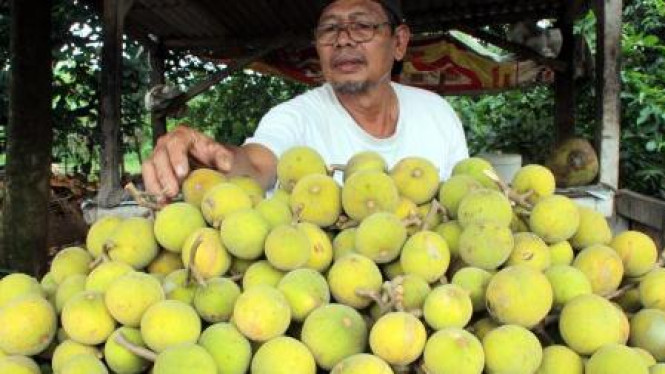 Pedagang buah kecapi