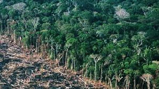 Hutan gundul akibat pembakaran lahan
