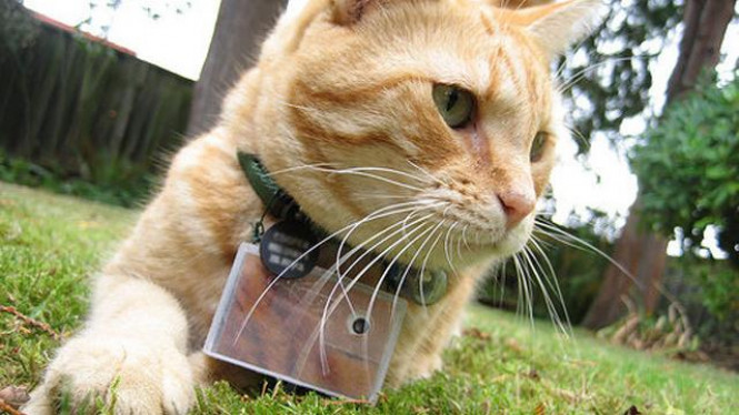 Cooper, si kucing fotografer