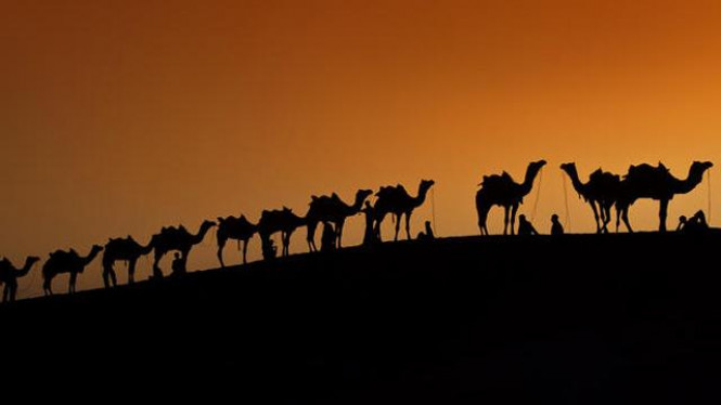 Siluet unta di Sam Dunes, India, saat senja tiba
