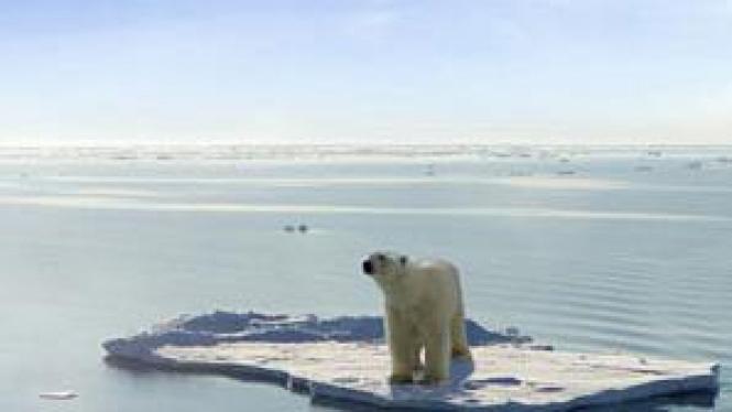 Beruang kutub di atas bongkahan es yang mencair