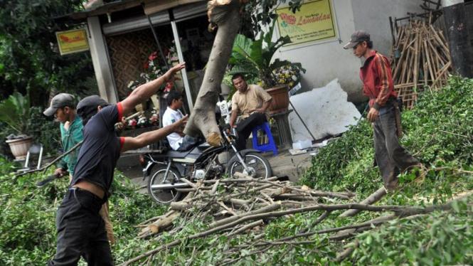 Pohon tumbang di Kebayoran Baru