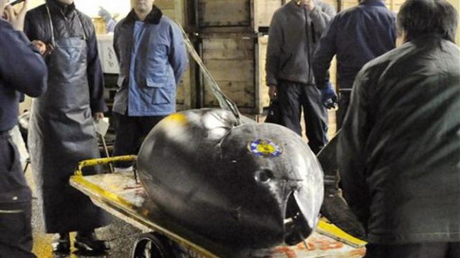 Ikan super mahal, tuna sirip biru, di pasar Tsukiji, Jepang
