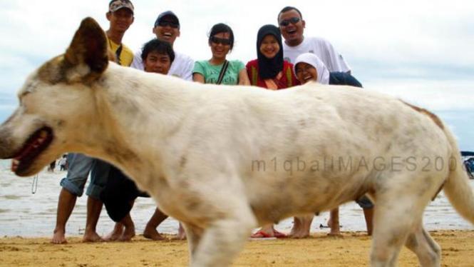 Anjing Nampang_peserta lomba FotoLoL