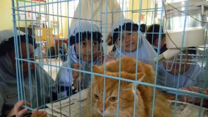 Anak SD Mengenal Hewan