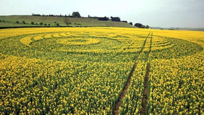 Sebuah crop circle buatan manusia di Inggris