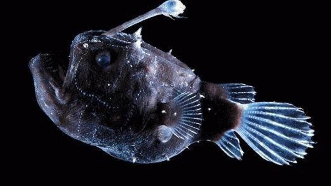 Hewan laut yang hidup di palung Mariana, tempat terdalam di bumi
