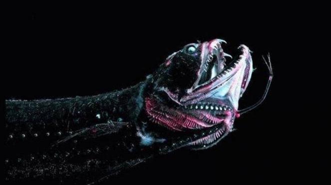 Hewan laut yang hidup di palung Mariana, tempat terdalam di bumi.