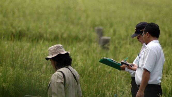 Petugas Batan meneliti crop circle di Sleman