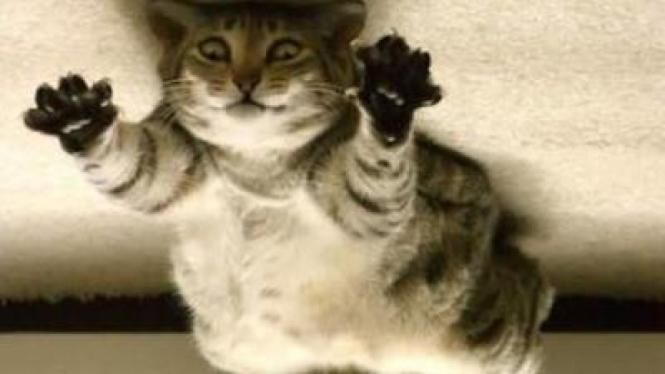 Kucing di ruangan tanpa gravitasi