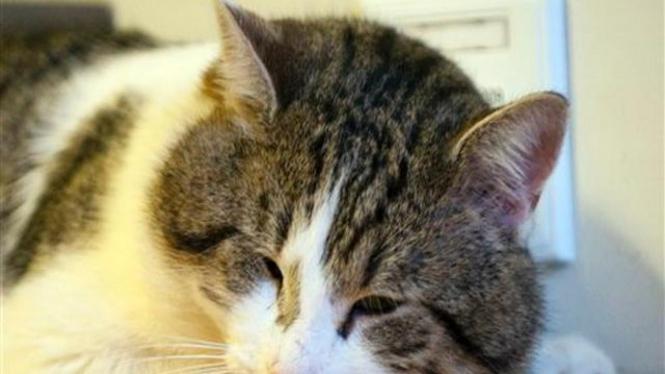 Larry, kucing penjaga rumah Perdana Menteri Inggris