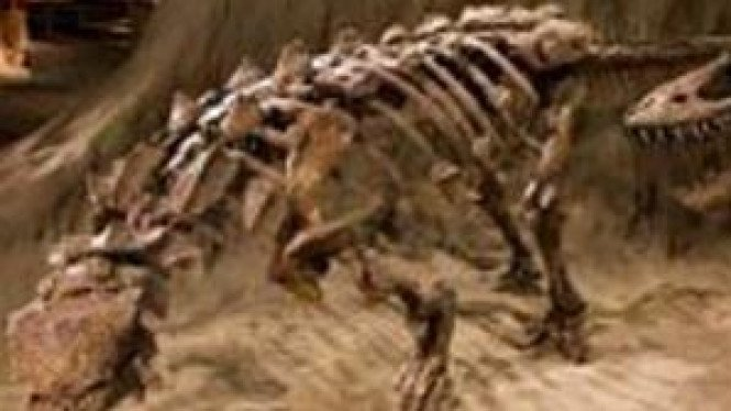Fosil ankylosaurus yang ditemukan di Alberta, Kanada